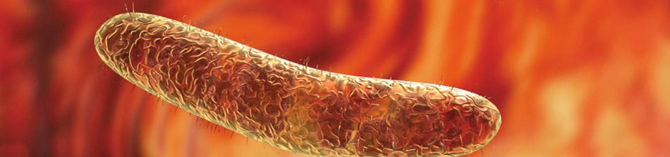 typhus schluckimpfung